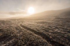 有薄雾的早晨足迹 免版税库存照片