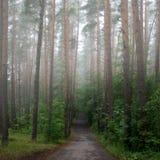 有薄雾的早晨路 图库摄影