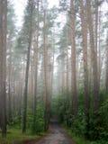 有薄雾的早晨路 免版税库存照片