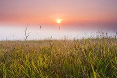 有薄雾的早晨风景 库存图片