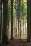 有薄雾的早晨 库存图片