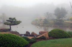 有薄雾的早晨 免版税图库摄影