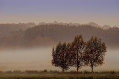有薄雾的早晨meaddow 免版税库存照片