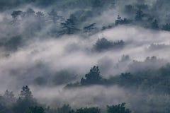 有薄雾的有雾的森林在克罗地亚 库存照片
