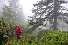 有薄雾的木头 图库摄影