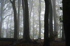 有薄雾的木头 免版税库存图片