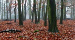 有薄雾的木头 免版税图库摄影