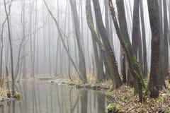 有薄雾的树丛 免版税库存图片