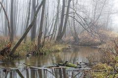 有薄雾的树丛 库存图片