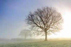 有薄雾的树剪影 图库摄影