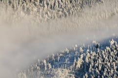 有薄雾的树木丛生的谷在冬天,大山 免版税库存照片