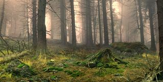 有薄雾的森林。 免版税图库摄影