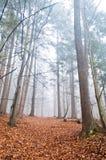 有薄雾的森林在与干燥叶子的秋天在地面 免版税库存照片