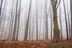 有薄雾的森林在与干燥叶子的秋天在地面 免版税库存图片