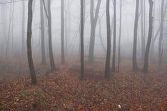 有薄雾的森林在冬天 免版税库存图片