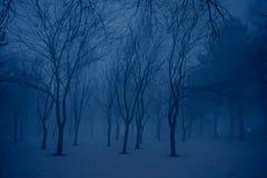 有薄雾的森林在夜之前 免版税库存照片