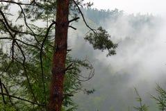 有薄雾的森林在雨天 免版税库存照片
