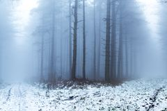 有薄雾的森林地在冬天 免版税图库摄影