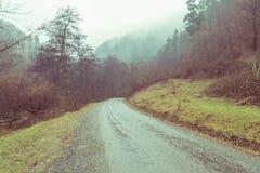 有薄雾的森林横向 库存照片