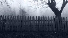 有薄雾的森林的恐怖场面 免版税库存图片