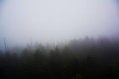 有薄雾的森林视图 图库摄影