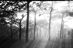 有薄雾的森林软的焦点在雨以后的与光芒,抽象自然 库存图片
