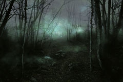 有薄雾的森林 库存例证