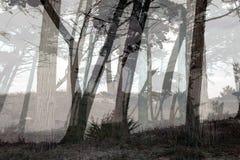 有薄雾的森林 图库摄影