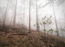 有薄雾的森林 库存照片