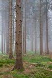 有薄雾的森林 库存图片