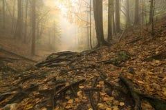 有薄雾的森林 免版税库存图片