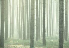 有薄雾的森林 免版税图库摄影