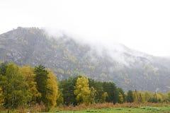 有薄雾的横向 森林山 免版税库存照片