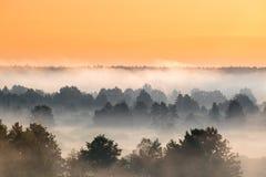有薄雾的横向 风景视图 在nat有薄雾的森林的早晨天空 免版税图库摄影