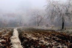 有薄雾的横向 免版税库存图片