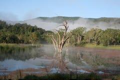 有薄雾的池塘反映 免版税图库摄影