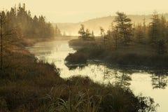 有薄雾的河和杉木在清早光 免版税库存照片