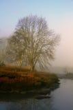 有薄雾的河 图库摄影