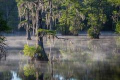 有薄雾的沼泽 图库摄影