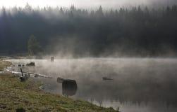 有薄雾的湖和杉木森林 库存图片