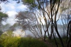 有薄雾的湖和森林在罗托路亚,新西兰 库存照片