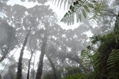 有薄雾的热带森林 免版税库存照片