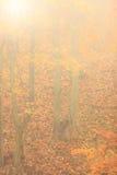 有薄雾的秋天公园在有雾的天 免版税库存照片