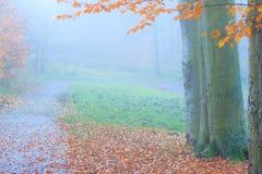 有薄雾的秋天公园在有雾的天 免版税库存图片
