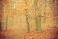 有薄雾的秋天公园在有雾的天 库存照片