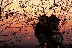 有薄雾的秋天日落 免版税图库摄影