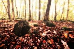 有薄雾的秋天早晨在森林 免版税库存照片