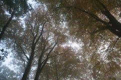 有薄雾的秋天树上面 免版税库存图片