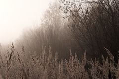 有薄雾的秋天森林风景 库存图片