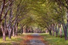 有薄雾的秋天路在森林里 库存图片